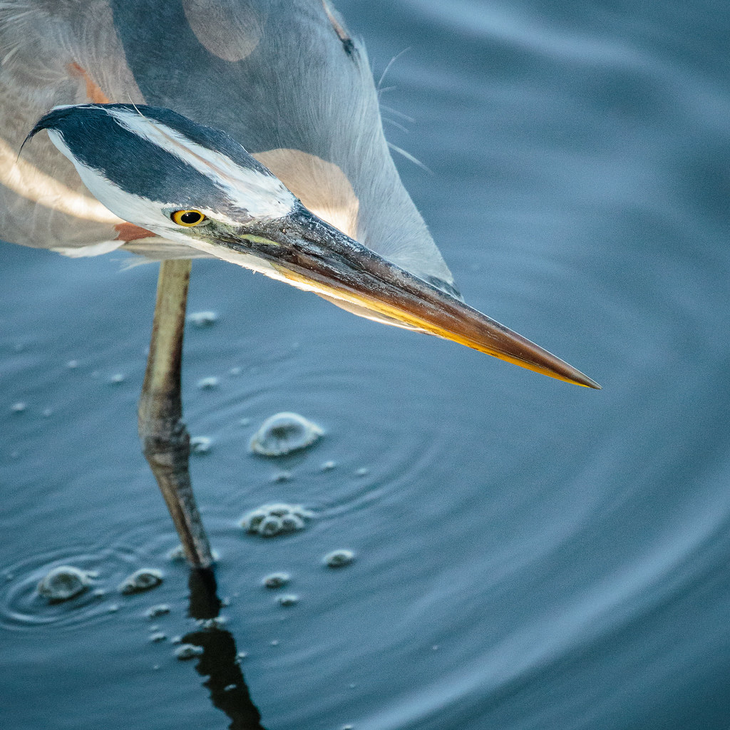 The World's Best Photos of bird and sarasota - Flickr Hive ...
