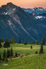 At 6400 (JGemplerPhotography) Tags: cascades mountains sunrise elk mountain landscape