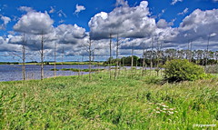 Mellnitz-Üselitzer Wiek (garzer06) Tags: wolken blau weis mellnitz üselitz deutschland himmel wolkenhimmel grün wasser landschaft vorpommernrügen landschaftsbild mecklenburgvorpommern landschaftsfoto vorpommern naturephoto inselrügen naturfoto naturphotography insel naturfotografie rügen landscapephotography landschaftsfotografie