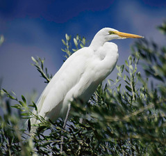bb_150302_'15 RV Trip up Coast_055 (lane.bailey1) Tags: 15trip 2015roadtrip ca15 egrets rv
