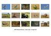 ARPS hanging plan (Julian Cook Photography) Tags: arps rps royalphotographicsociety distinction hangingplan naturalhistory wildlife birds animals eastafrica