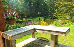 A bench to sit and enjoy nature (Trinimusic2008 - stay blessed) Tags: trinimusic2008 judymeikle nature hbm bench lisle ontario canada flowers grass pond country outdoors