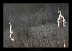 Web - rushes 1