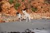 #sesióndefotos  practicando en la #playa con mis dos #babydogs #bodeguero y #samoyedo #mestizos #rescatados (MisLissit) Tags: samoyedo babydogs playa rescatados bodeguero mestizos sesióndefotos nikon5500 dog cachorro puppy corriendo practicando feliz agosto naturaleza