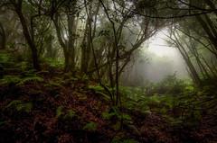 Helechos y niebla... (JACRIS08) Tags: