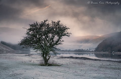 Loch Of The Lowes - Winter Is Coming-Flickr (.Brian Kerr Photography.) Tags: stmarysloch lochofthelowes winter frozen freezing coldmorning mistymorning mist cloudinversion briankerrphotography briankerrphoto scotland scottishlandscapes scottish scotspirit scottishborders hawthorn tree january nature naturallandscape natural outdoor outdoorphotography opoty sony a7rii availablelight landscape
