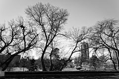 too many dreams, not enough hope (fallsroad) Tags: tulsaoklahoma urban city buildings trees bw blackandwhite monochrome