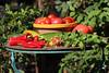 CKuchem-5630 (christine_kuchem) Tags: basilikum bauerngarten biogarten bioqualität ernte erntezeit fleischtomate garten gemüse gemüsegarten grün gurke kräuter nutzgarten paprika peperoni pflanze rarität sommer sorte sorten sortenvielfalt tomate vielfalt zucchini bio biologisch frisch gelb gesund lecker natürlich orange reif rot selten unbehandelt