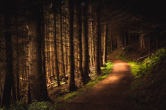 Spotlit Path (Augmented Reality Images (Getty Contributor)) Tags: track shadow perthshire landscape leefilters longexposure forest scotland nature sunshine woodland canon countryside cloanglen light unitedkingdom gb