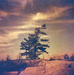 High Rock (.grux.) Tags: holga120n film lomoredscale100 120 mediumformat 6x6 expiredfilm plasticfantastic zonefocus sky trees clouds rock island highrock georgianbay