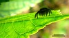 61 (bebsantandrea) Tags: levanto baiedellevante liguria natura campagna wild giardino fiori rosa pesco ciliegia fico ficodindia carciofo formica topo libellula mosca zanzara grillo ape vespa lucertola lizard farfalla butterfly riccio cimice ramarro afide pianta albero ragnatela gocce raindrop microcosmo sfingedelgalio farfallacolibrì ragno spider limone arancio arancia boragine impollinatrice cicala autunno estate primavera inverno bruco margherita zucca lampone fragola mantidereligiosa gallina coniglio coccinella kiwi