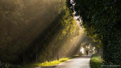 The lonely cyclist (BraCom (Bram)) Tags: bracom trees cyclist fietser mist fog sunrays zonneharpen sunlight zonlicht road dike weg dijk morning ochtend grass gras countryroad landweg polder dirksland noorddijk goereeoverflakkee zuidholland nederland southholland netherlands holland 169 widescreen bramvanbroekhoven nl