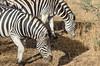 SENEGAL -  329 (Giulio Mazzini) Tags: adventure africa avventure black desert face free holiday landscape libertà portrait river senegal sun teranga world