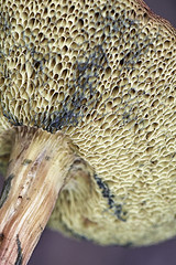 champignon (BelgiumOnePoint) Tags: champignon mushroom paddenstoel jardin nature garden tuin spore nikon d500 c1