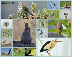 Instead of new pictures I assembled some highlights of the past months in a collage. Hope you like them. (Corine Bliek) Tags: bird birds collage vogel vogels natuur calender kalender cover poster