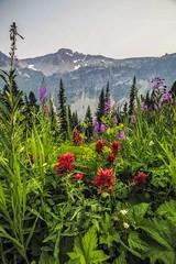Wildflowers along the Maple Pass Trail 2 (i8seattle) Tags: maplepass maplepassloop lakeannmaplepassloop lakeann heatherpass northcascades northcascadeshighway rainypass