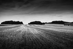 Vexin français (Meculda) Tags: paysage landscape monochrome monochrom noiretblanc noirblanc champs ciel arbre biche blackandwhite blackwhite nikon d7200 35mm jour extérieur