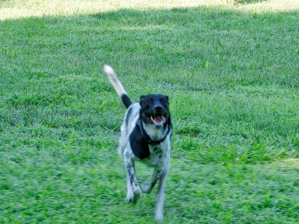 Cypress Dog Rescue