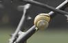 sporty snail... :-) (Stefan Giese) Tags: canon 6d 24105mm wickede schnecke snail gelb schneckenhaus gelbschwarz schwarz dornen makro macro closeup
