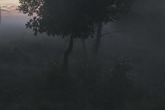 journey in this summer night II (Mindaugas Buivydas) Tags: lietuva lithuania color summer august evening eveninglight twilight fog mist tree trees sunset softgreen delta nemunasdelta nemunasdeltaregionalpark nemunodeltosregioninisparkas favoriteplaces mindaugasbuivydas portraitofthetree ruguliai thistagisforme memelland journeyinthissummernight