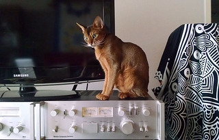cat-stereo