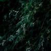 Forest Grass 013 (noahbw) Tags: d5000 dof nikon volobog abstract blur depthoffield flowers forest grass natural noahbw square summer woods lowlight dark darkness