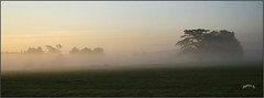 Cattle In The Mist.. (Picture post.) Tags: landscape nature groundmist cattle building trees cedar croome fields sunrise summertime wide paysage arbre brume panorama