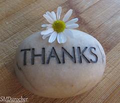 0807 StayingHealthy Gratitude c (SMD Pics) Tags: healthy macro macromondays thanks gratitude rock daisy beauty positive attitude stayinghealthy