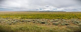 Grasshopper Flat, Malheur County