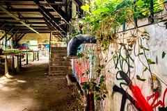 Back to nature (Talixor) Tags: alt hdr gera industriegebäude ruine pflanzen urban