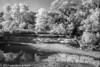 BullCreekInfraredBW-687 (wanderingYew2 (thanks for 3M+ views!)) Tags: 120 bullcreekgreenbelt fujigw690 r72filter texas blackandwhite film filmscan infrared infraredfilm mediumformat rolleiinfraredfilm rolleiinfrared400
