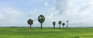 Myanmar, Taninthari Region, Myeik District, Myeik Township, Ma Zaw Village Tract