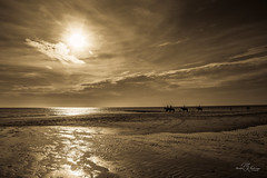 Evening beach riders (Monika Kalczuga (on&off)) Tags: golden beach horseriders nature seaside beachride horeses goldenlight sand reflections serene denhelder netherlands holland natuur coastline northsea sea coast water clouds sky seascape evening