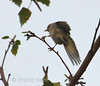 bird fluttering (nazirshahid65) Tags: bird fluttering white background outdoor tree plant london city europe canon750d efs70300mm usm