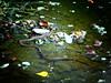biscia dal collare (annalobergh) Tags: serpente rettile biscia dal collare dacqua fiume verde natura nature animali