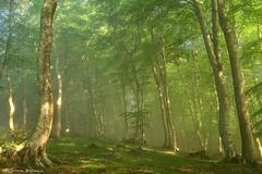 Magic of the forest (Hector Prada) Tags: bosque luz primavera niebla bruma árbol hojas musgo mágico mañana forest light spring fog mist tree leaves moss magic moment naturaleza nature paísvasco basquecountry