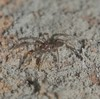 Aspergillus Mold spider Airlie Beach rainforest P1030497 (Steve & Alison1) Tags: aspergillus sp mold trichocomaceae spider airlie beach