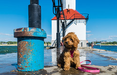 Pier Pose (tquist24) Tags: cavapoo lakemichigan michigan nikon nikond5300 sicily stjoseph clouds cute dog geotagged lake leash lighthouse pier puppy reflection reflections sky summer water saintjoseph unitedstates stjosephlighthouse