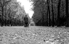 autumn has come (ThorstenKoch) Tags: streetphotography street strasse düsseldorf duesseldorf stadt schatten shadow herbst autumn blackwhite outdoor weather fuji fujifilm xt10 trees park mood tuesday man walk light shadows cold