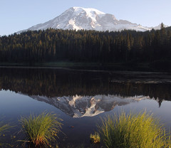 It was a good morning...... (McCoy352) Tags: morning grasses am mountrainier reflectionlakes august summertime beautiful nature pacificnorthwest calm bugs