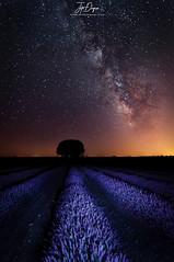 Where is E.T. (Juancdieguez | Photography - Madrid (ES) -) Tags: encina formaciónespacial nocturna estrellas árbol led vialactea guadalajara moradas lavanda naturaleza brihuega castillalamancha europa españa galaxia quercusilex ledanca es