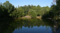 Une ballade dominicale en forêt du Madrillet et du Rouvray (jeanlouisallix) Tags: rouen saint etienne du rouvray forët sylviculture sousbois chemins arbres nature paysages landscape