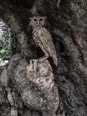 A Wood Owl (Steve Taylor (Photography)) Tags: owl art bird sculpture carving brown green wood wooden asia city singapore tree bark trunk grain texture flowerdome gardensbythebay