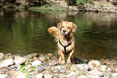 Colorado Summer_PHO 002_38 (luciwest) Tags: colorado summer ftcollins fortcollins 2017 dog whiskeydog