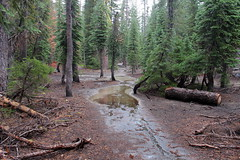 Backpacking in the rain... (rozoneill) Tags: lassen national park redding chico california hiking pacific crest trail backpacking volcanic wilderness cascades volcano peak