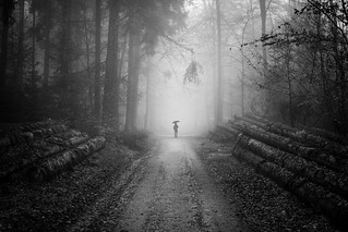 a man on the forest road