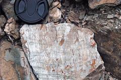 Metcalf Phyllite (Neoproterozoic; Laurel Creek Road outcrop, Great Smoky Mountains, Tennessee, USA) 12 (James St. John) Tags: metcalf phyllite phyllites metamorphic rock rocks metamorphics snowbird group ocoee supergroup precambrian proterozoic neoproterozoic laurel creek road great smoky mountains national park appalachians appalachian tennessee