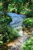 2017-08-28 cannock chase 056 (sonya.britton) Tags: cannockchase staffordshire ancientforest wood forest walk family tree stream