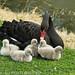 Mum & the kids.