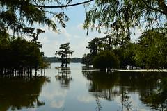 Lafayette 1 (Krasivaya Liza) Tags: lafayette la louisiana bayou bayous swamp swampland swamptour south southern usa nature